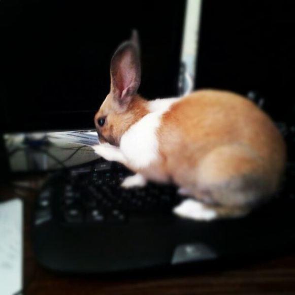 خرگوش کد زن :)